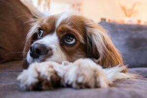 pet friendly burglar alarms